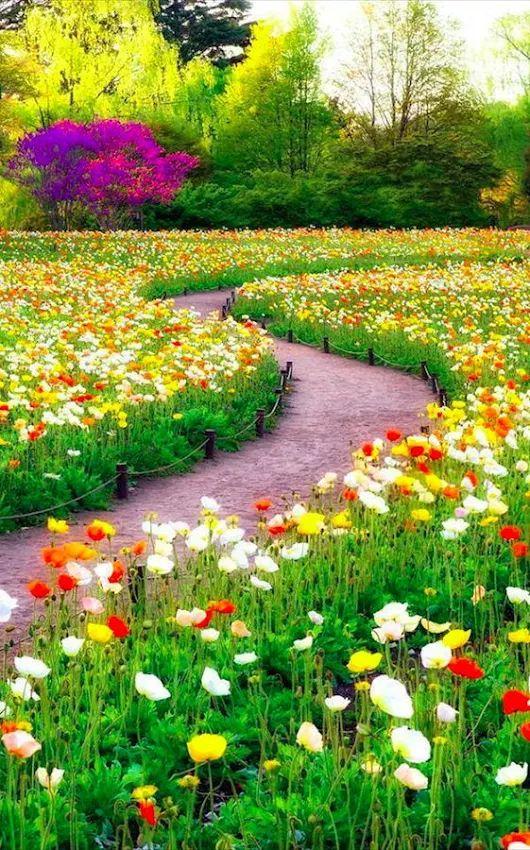 Beautiful Gardens Flowers Places Landscapes Nature Animals Art Flower Gardening Garden Festival