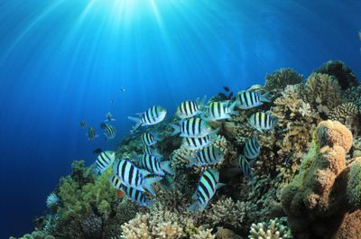 Dangerous Fish and Sea Animals: 7. Damselfish - Aggressive, But Not Dangerous