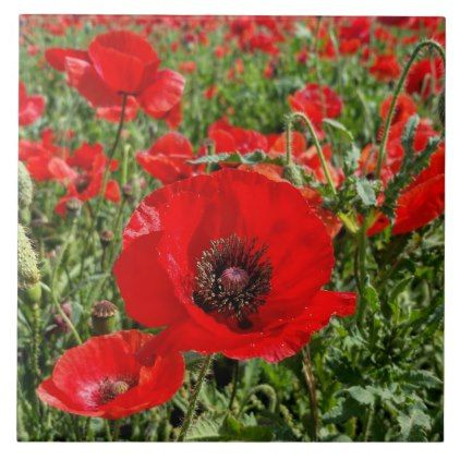 Flanders Poppy Ceramic Tile - home gifts ideas decor special unique custom individual customized individualized