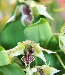 Orchideeën in je dromen