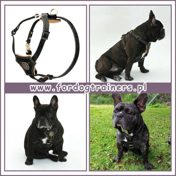 Szelki skórzane dla małych psów z miękką wyściółką «Cichy spacer» pasują dla psów rasy buldog francuski i jej podobnych. Szelki dla psa skórzane z grubej naturalnej skóry angielskiej, elastycznej i wytrwałej.