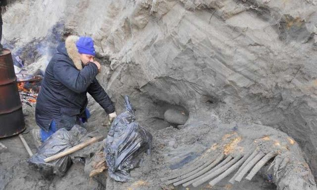 Bones of hunted mammoth show early human presence in Arctic #Geology #GeologyPage