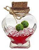 Review for Luffy Marimo Ball Gift Set: Marimo Plant Symbolizes Love - Includes a Heart Shap... - Catherine HALLETT  - Blog Booster