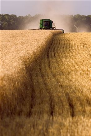Harvesting a wheat field in South Dakota.