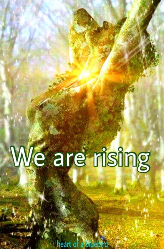 WE ARE THE CHILDREN OF LIGHT . WARRIORS OF THE DIVINE FEMININE , WE ARE SUNS OF FIRE . thor holgersen