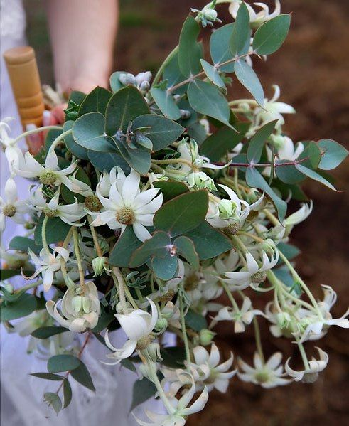 Australian native flower bouquets