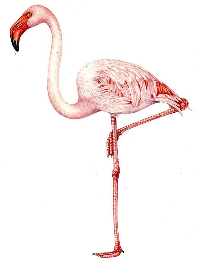 botanical flamingo - Google Search