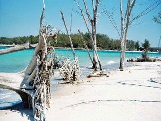 Explore Whitney Beach, with its white sand and turquoise water, near Sarasota.