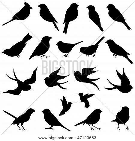 Bird Silhouettes Clip Art Clipart