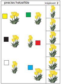 Knijpkaart tulpen, zoek precies dezelfde