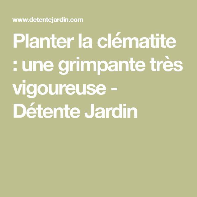 Planter La Clématite : Une Grimpante Très Vigoureuse   Détente Jardin