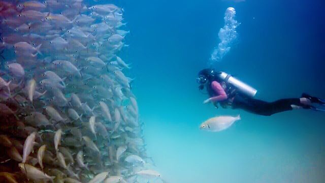 scuba diving at Sipadan island - best borneo holidays, borneo holidays travel, borneo holidays, borneo holidays 2018, borneo holidays photo, borneo holidays blog, borneo holidays what to do, borneo holidays best time to go, borneo holidays family, borneo http://www.deepbluediving.org/tips-for-underwater-videography-and-photography/