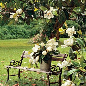 The Complete Guide to Essential Southern Plants: Magnolia Tree