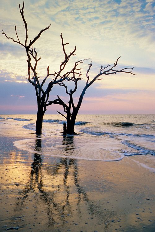 ** Boneyard beach, Botany Bay Plantation, Edisto Island, SC © Doug Hickok All Rights Reserved by hueandeyephotography.tumblr.com