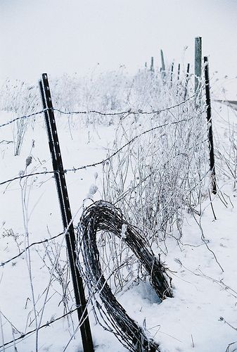 Barbed wire fence in winter ..rh  (Soon there will be so much snow--it will be covering that fence!