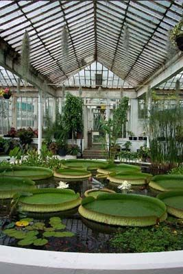 botanical gardens - dublin, ireland...for an afternoon of green serenity