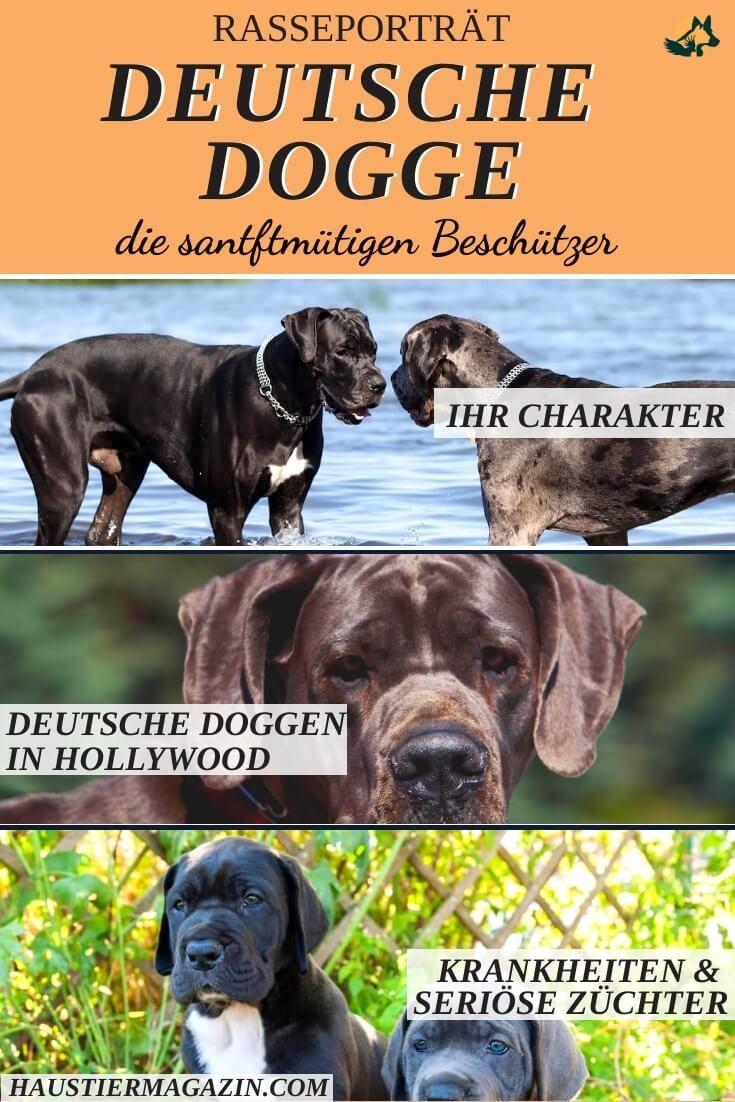 Deutsche Dogge Steckbrief Mit Fci Klasse Und Mehr Hunderassen Tiere Und Haustiere