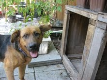 """""""It's A Dog's Life""""-  Kenora's Dog Fostering Network - amazing group"""