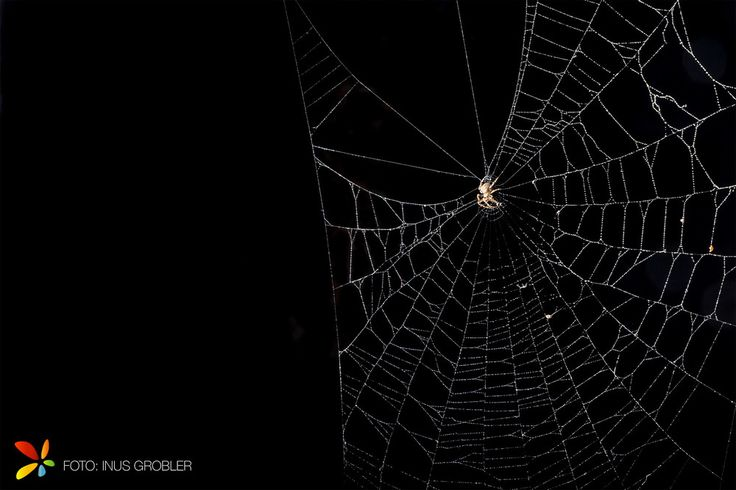 When photographing a spiderweb it can be difficult to make a spiderweb stand out…