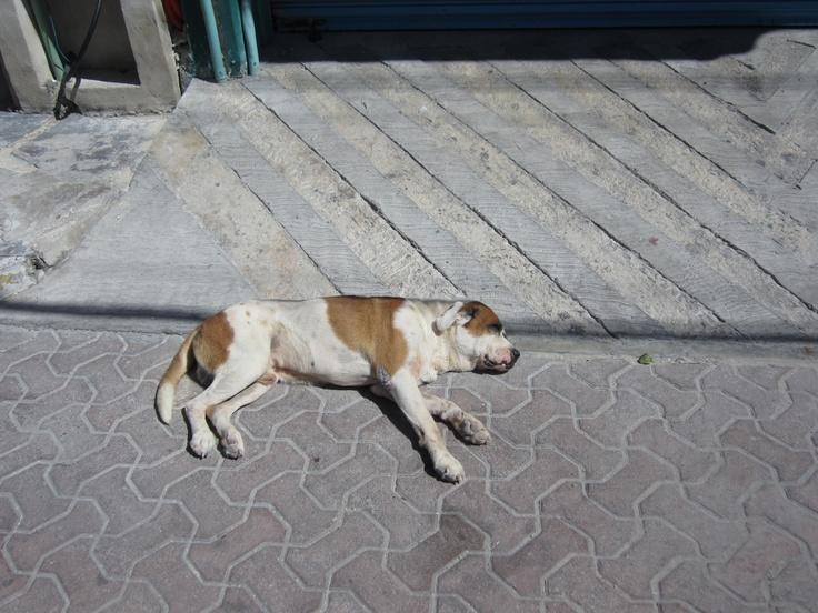 Sun tannin' dog