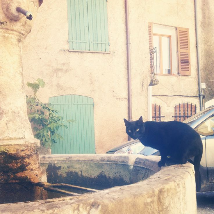 #cat #france #instagram