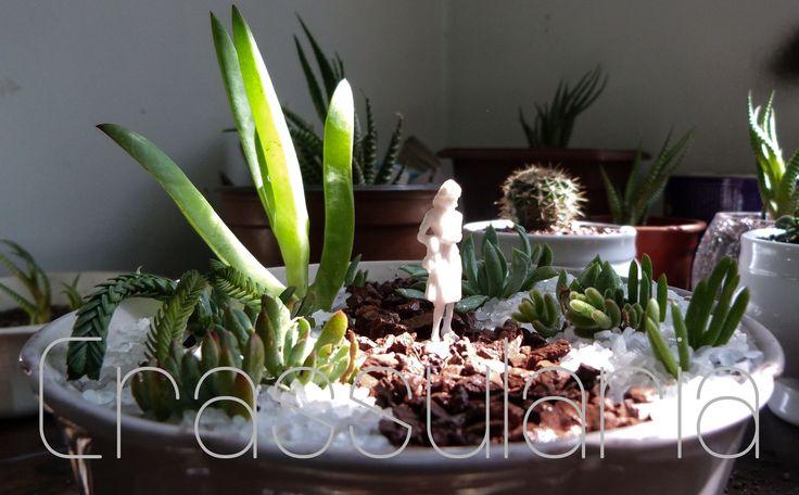 Terrario www.facebook.com/suculentascrassularia