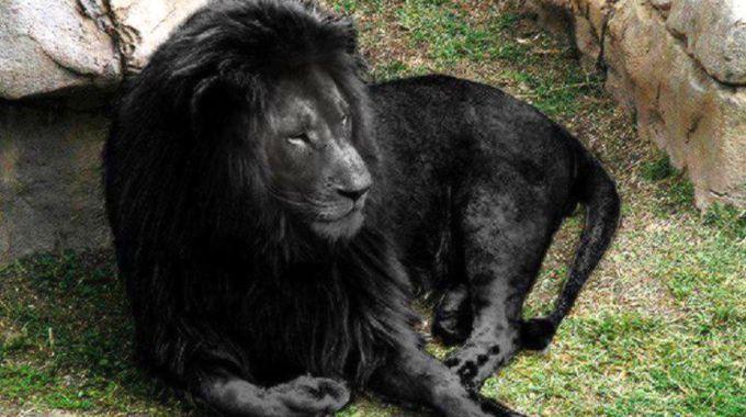 leoni - Cerca con Google