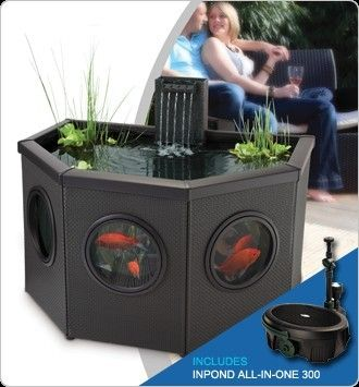 Live Koi Fish Pond | eBay
