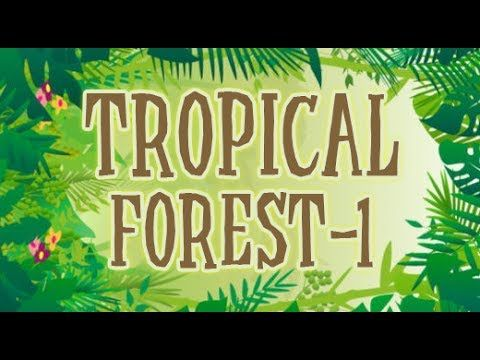 Types of Forests for Kids | Tropical Forest | Animation Learning Videos ...