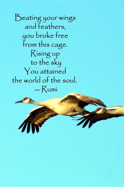 """""""Beating your wings and feathers, /you broke free from this cage.""""   -- Rumi – Quote on original image of sand hill cranes at Bosque del Apache, New Mexico. For more quotations on the creative process journey, go to http://www.examiner.com/article/forty-quotations-for-writing-inspiration"""