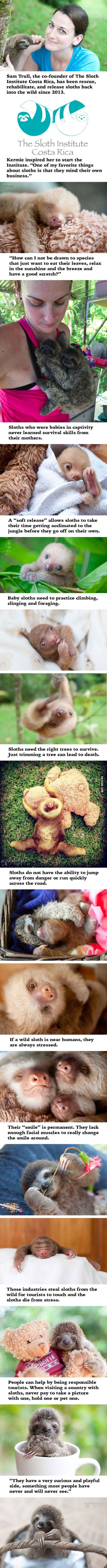 Welcome To The Sloth Institute Which Rehabilitate Orphaned Baby Sloths