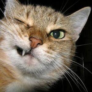 Стало известно, как коты влияют на наше здоровье