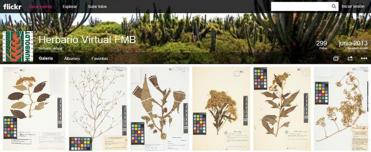 Herbario Federico Medem Bogotá (FMB) localizado en la sede Villa de Leyva del Instituto Humboldt http://www.flickr.com/photos/98115610@N03/