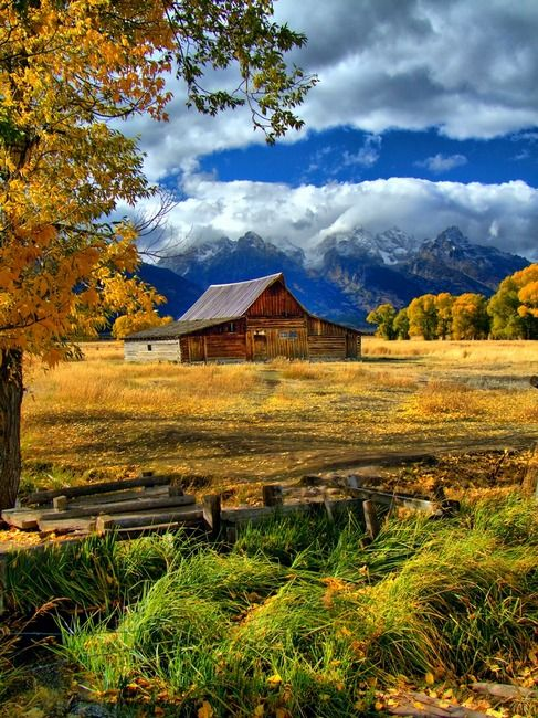 Gold Around The Moulton Barn By Jerry Patterson Barn