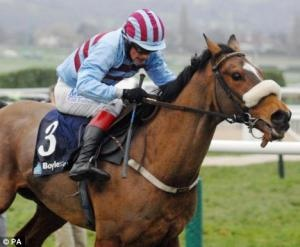 Flat Winning 3yo Clodovil Filly Related to Champion Hurdle Winner | ParadeRing Horse Sales