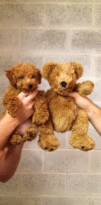 ITS JUST LIKE A TEDDY BEAR SO FREAKIN CUTEEEEE. I wantttttt