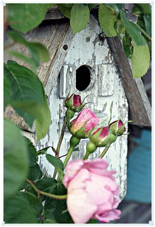 "weathered bird house and pink roses ♥ For the ""Cosy"" Garden"