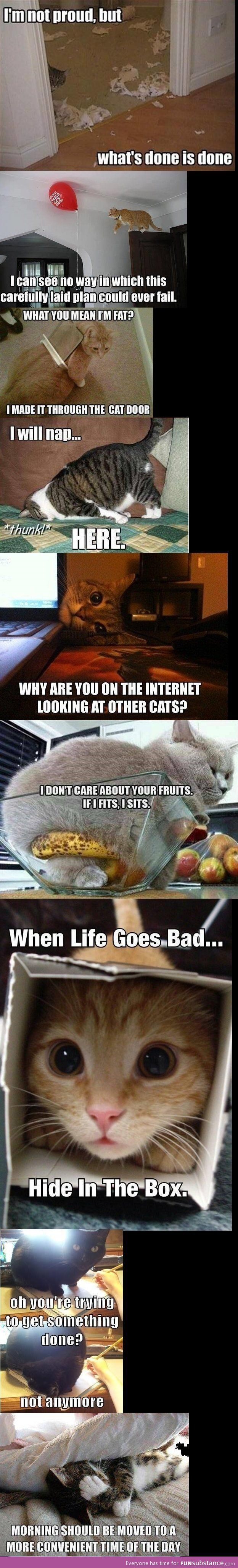 I usually don't find cat pictures funny... but the cat in the fruit bowl was hilarious