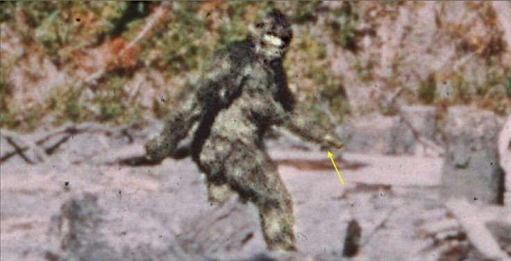 Patterson Gimlin Bigfoot Footage Conspiracies | The Fortean Slip