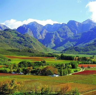 mountain and vineyards - Western Cape