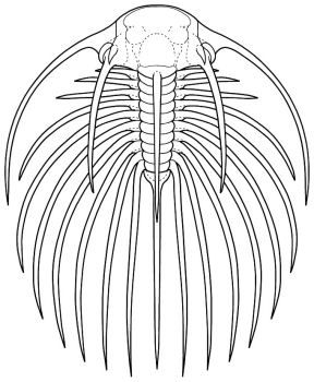 Drawing A Trilobite Drawings Tattoos