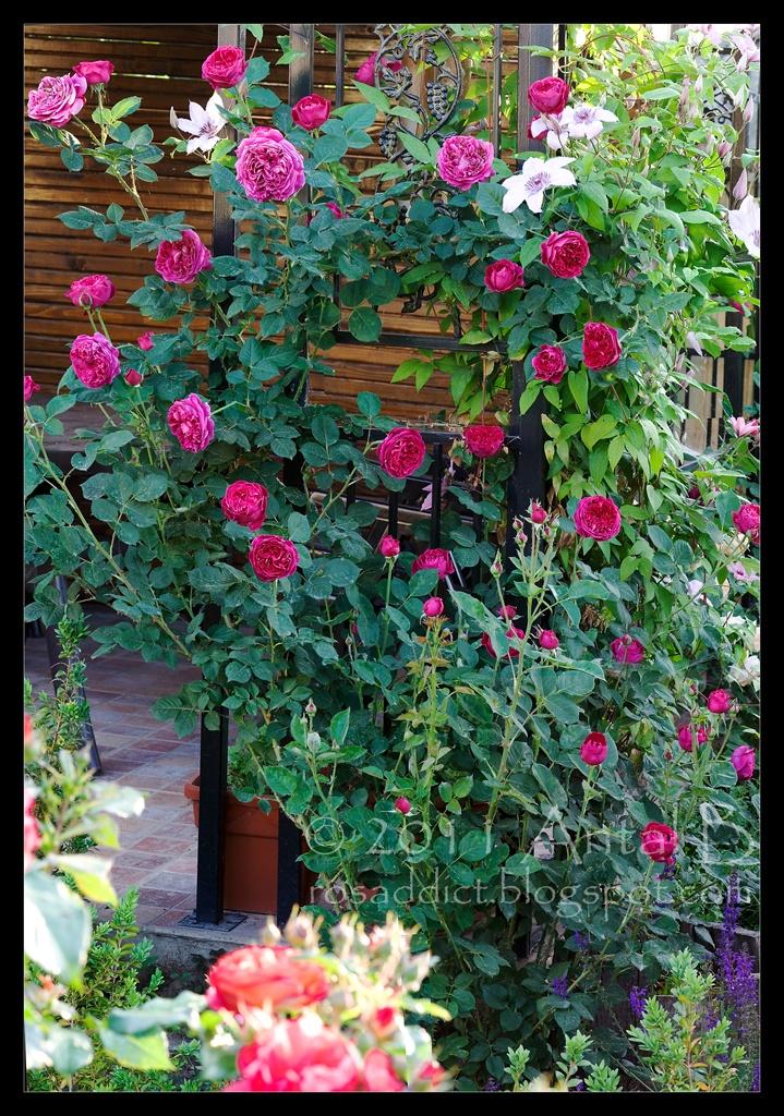 Les 244 meilleures images propos de fleurs contenants for Antony tudor jardin aux lilas