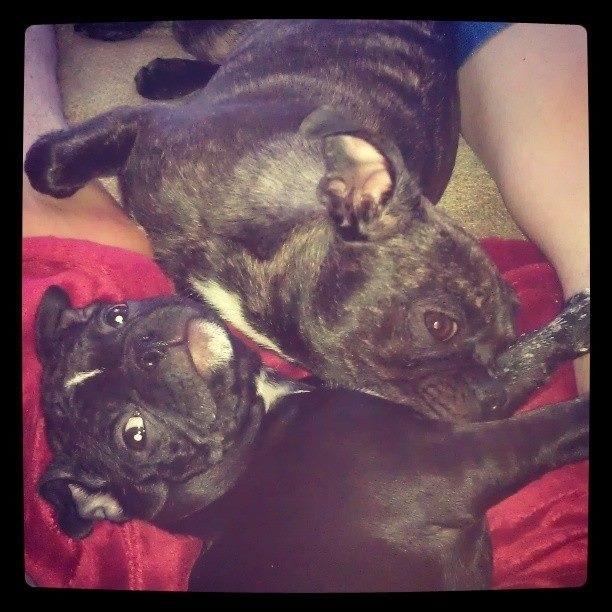 Love Love Dill n Pickles puppylove bestfriends
