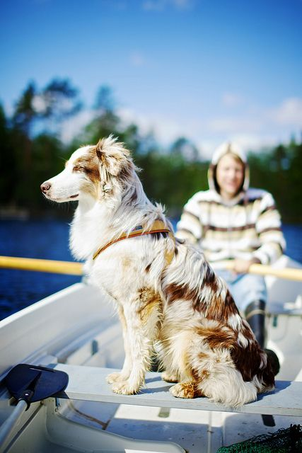 This looks like it would be so much fun. :) boating with your dog. :)
