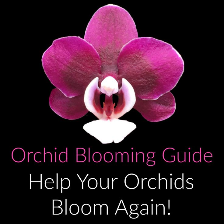 557 Best Orchid Care Images On Pinterest Orchid Care