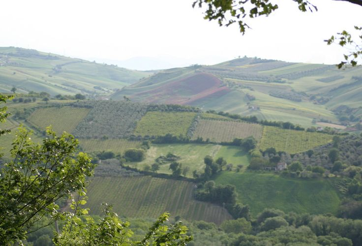 Largely an agricultural region, Abruzzo has some of Italy's finest olive oils.And is also famous for its Montepulciano wine— one of the finest and most exported in the world!But did you kn…