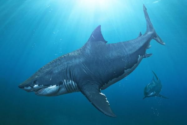 New research suggests it wasn't weather that wiped out the giant megalodon shark, but a lack of food and new competition.