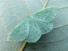 H-A-L-E.COM HALE to SERENE AQUA - butterfly - H.A.L.E.COM #HALE #30DaysOfSummer