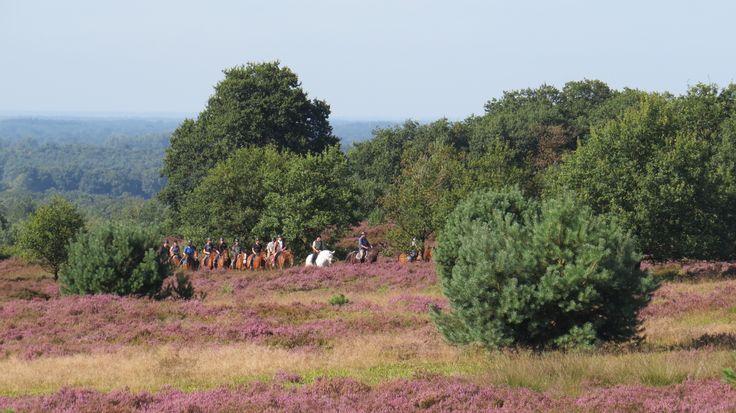 2016-08-14 De Sprengenberg met mooi weer is een van de hoogtepunten in het Nederlandse landschap, ook met paarden te doorkruisen