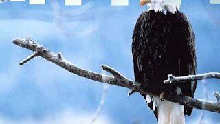 szulák andrea szabadon szállok - YouTube
